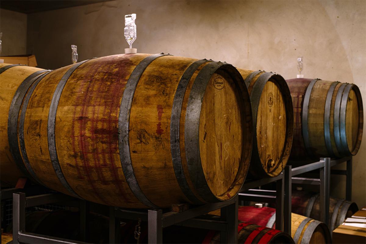 cudze chwalicie winnica plochockich 2