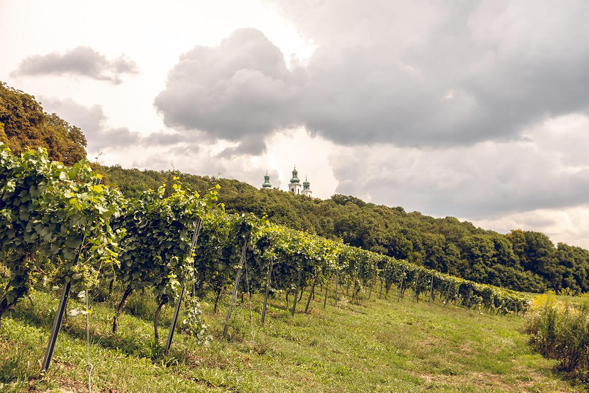 cudze chwalicie winnica srebrna gora